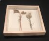 We have framed several unique items, such as these stalks of wheat we sewed down inside a maple shadowbox.